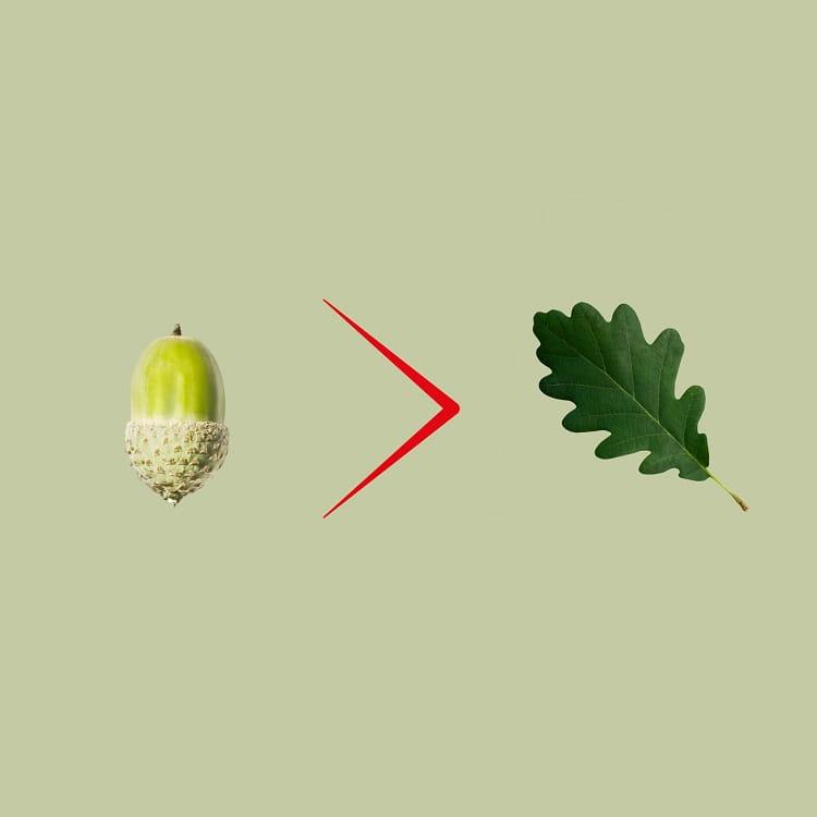 Acorn to leaf