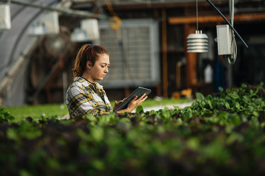 A person with a tablet in a commercial greenhouse