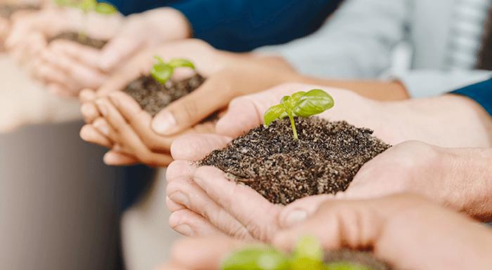 Hands holding soil and seedlings