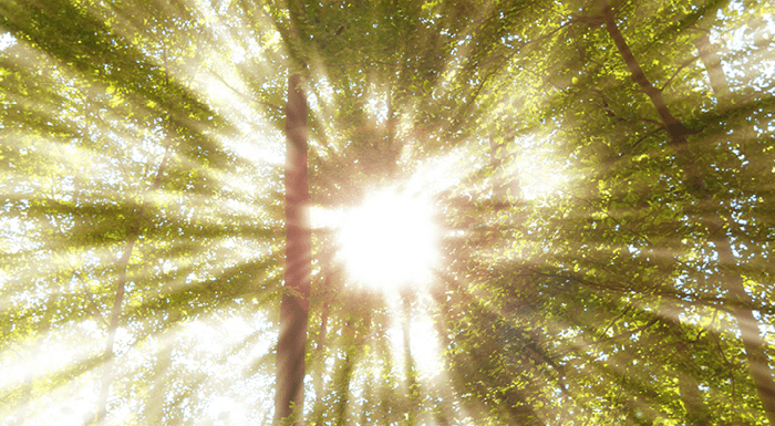 Rays of light coming through trees