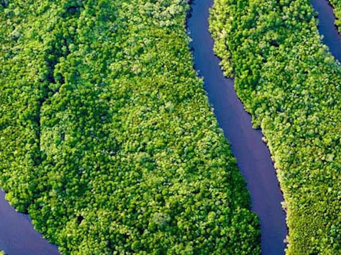 River through green fields