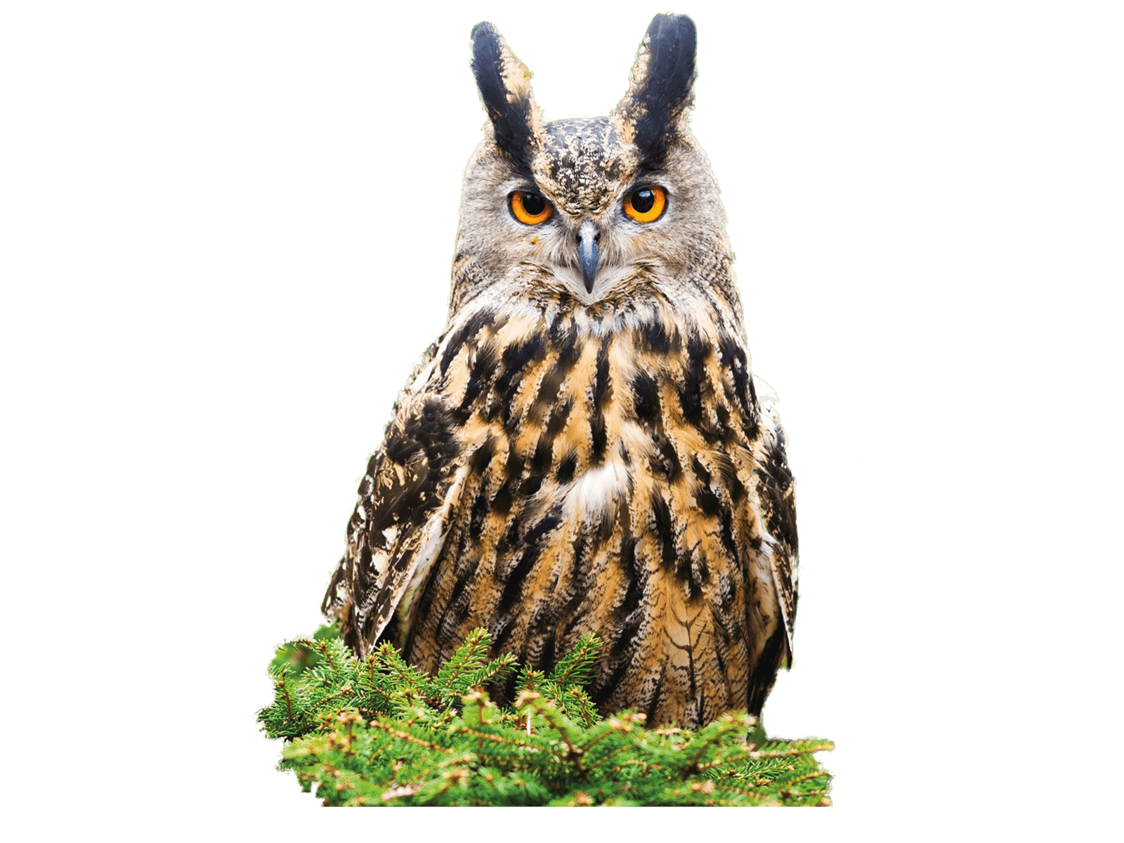 Owl in branches image