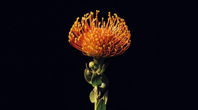 https://economia.icaew.com:443/-/media/economia/images/article-images/630gardens-flowers-min.ashx