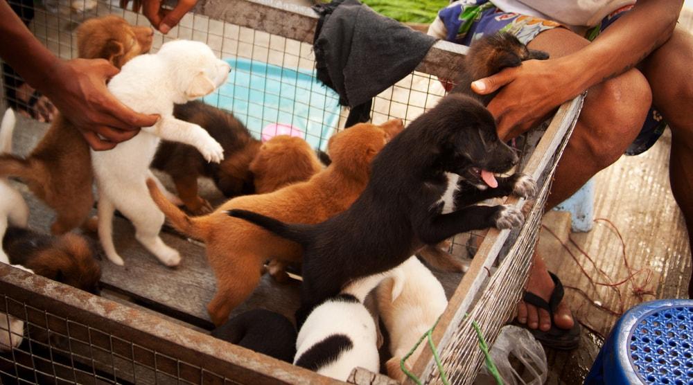 puppy sale 630