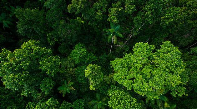 https://economia.icaew.com:443/-/media/economia/images/article-images/rainforest2630.ashx