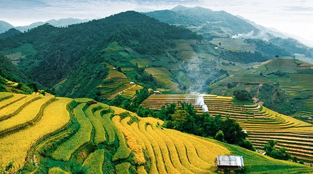 https://economia.icaew.com:443/-/media/economia/images/article-images/vietnam350.ashx